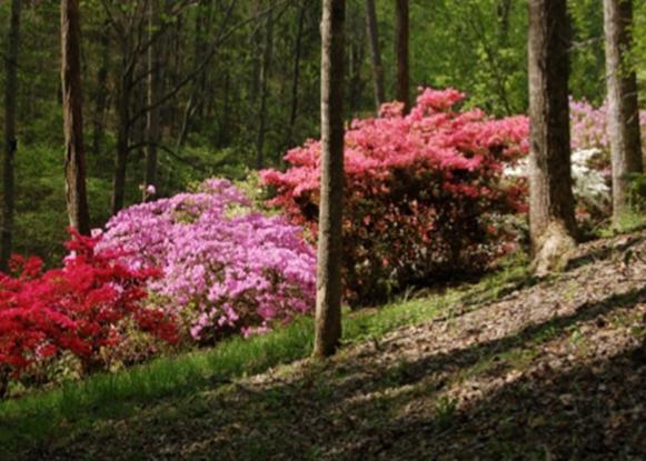Arboretum main pic