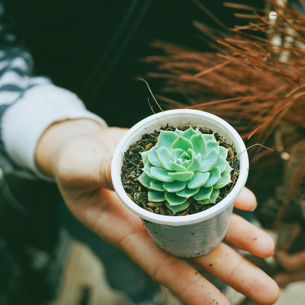 person holding a small potted plant