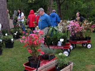 spring plant sale with flowers in red wagons