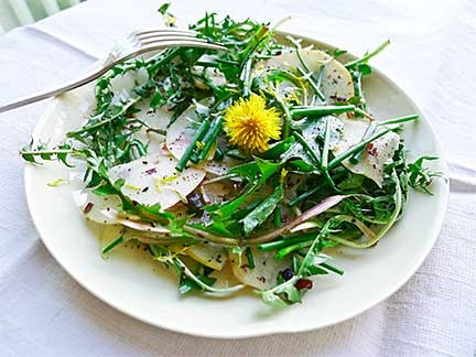 edible dandelions and apple salad